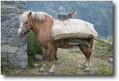 la possenza del cavallo'