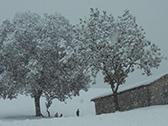 W la neve