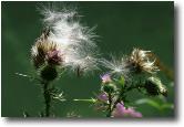 Il vento che semina